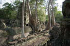 The top of Ta Prohm