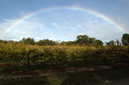 Rainbow over Vines