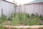 The Garden (Before)