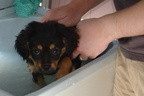 Oscar's First Bath